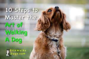 10-steps-to-Master-Art-of-Walking-Dog