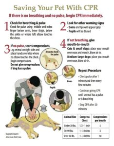 ErikWalksDogs.com - Saving-pet-with-cpr-Diagram